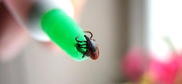 Advice on diagnosing Lyme disease